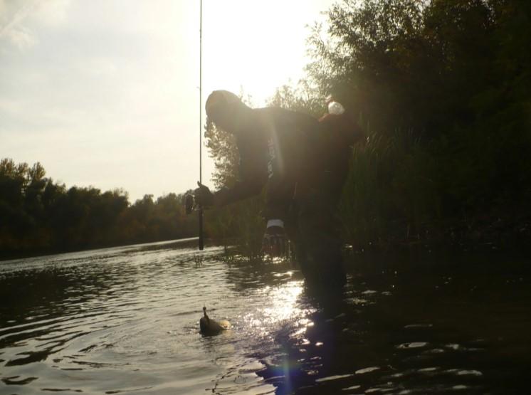 Ловим жереха на больших реках